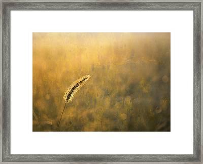 Foxtail Framed Print