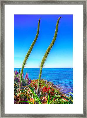 Framed Print featuring the photograph Foxtails On The Pacific by Jim Carrell