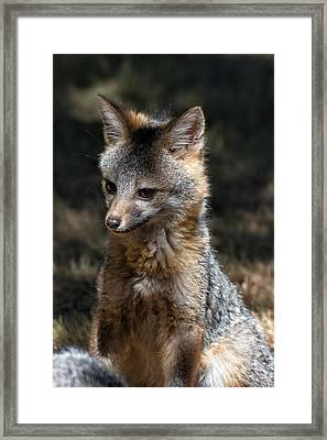 Foxy Framed Print by Kathleen Bishop