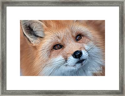 Foxy Lady Framed Print
