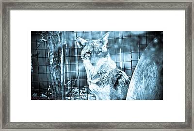 Foxy Framed Print by Melinda Pettery