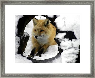Foxy View Framed Print by Teresa Schomig