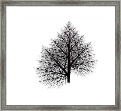 Fractal Essence Of A Tree Framed Print by Richard Ortolano