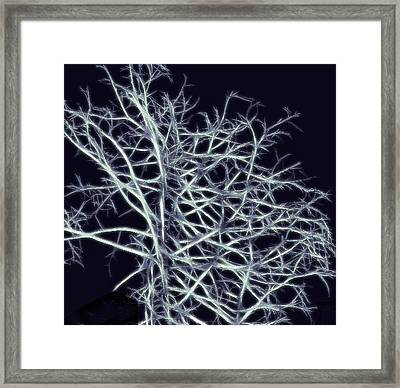 Fractal Ghost Tree Framed Print by Steve Ohlsen