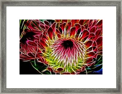 Fractal Protea Framed Print by Michael Durst