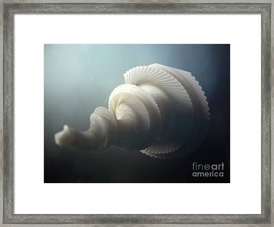 Fractal Seashell  Framed Print by Pixel  Chimp