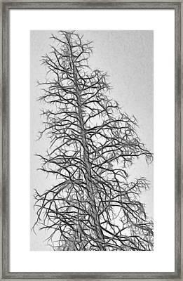 Fractal Tree Abstract Framed Print by Steve Ohlsen