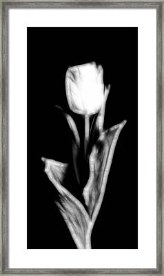 Fractal Tulip Framed Print by Sebastian Musial