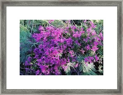 Fractalius Flowers Framed Print