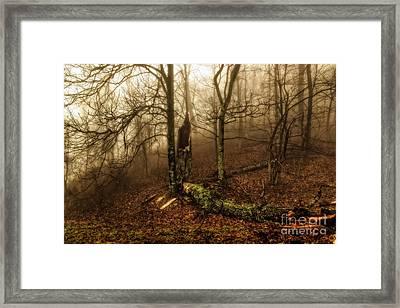 Fractured In Fog Framed Print by Deborah Scannell