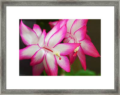 Fragile And Cheerful Framed Print by Felicia Tica