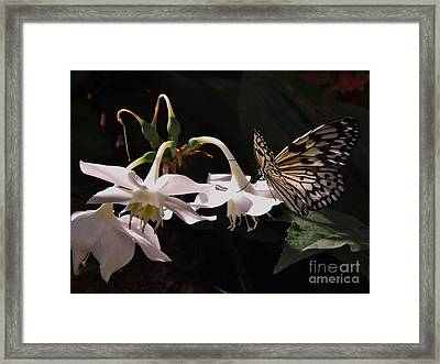 Framed Print featuring the photograph Fragile Beauty by Brigitte Emme
