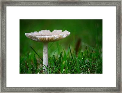 Fragile Beauty Framed Print by David Cothran