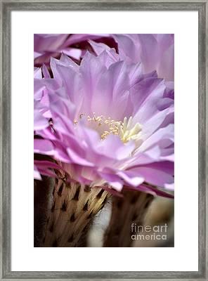 Fragile Beauty Framed Print by Deb Halloran