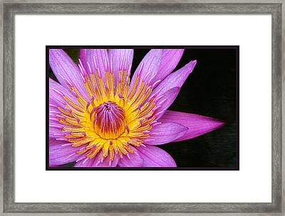 Fragile Beauty Framed Print by Kim Andelkovic