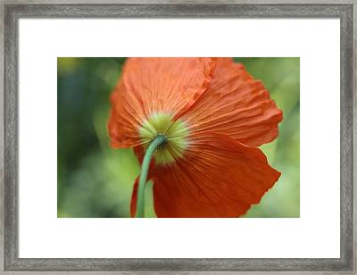 Fragile Bonnet Framed Print by Connie Handscomb