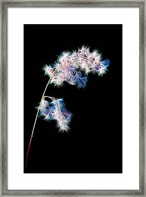 Fragile Framed Print by Brad Grove