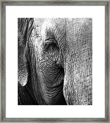 Fragility  To Forget  Framed Print by Jerry Cordeiro