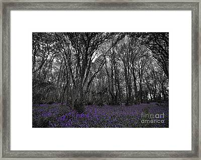 Fragments Of Color Bluebells Framed Print by Julian  Walters