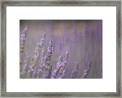Fragrance Framed Print by Lynn Sprowl