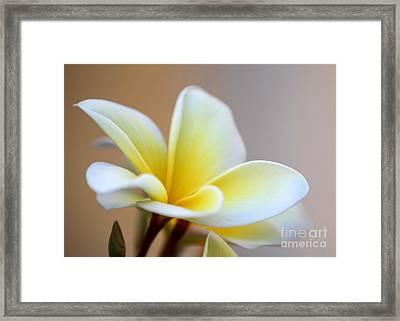 Fragrant Frangipani Flower Framed Print by Sabrina L Ryan