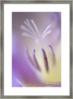 Fragrant Freesia  Framed Print by Deb Halloran