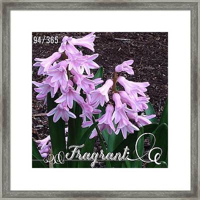 Fragrant. I Love When These Pink Framed Print