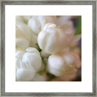 Fragrant Innocence Framed Print