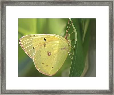 Framed Print featuring the photograph Frail Beauty by The Art Of Marilyn Ridoutt-Greene