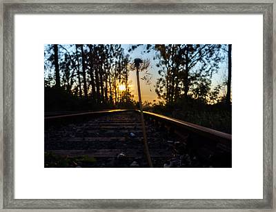 Frailty Framed Print by Tgchan