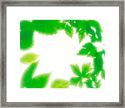 Frame Of Fresh Green Leaves On Shiny Framed Print