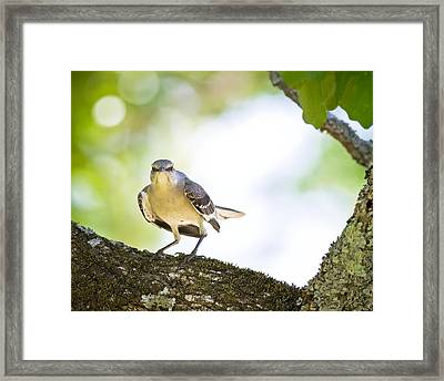 Framed Print featuring the photograph Framed by Annette Hugen