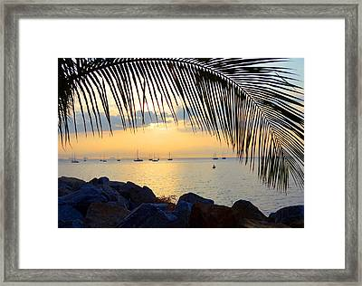 Framed By Fronds Framed Print