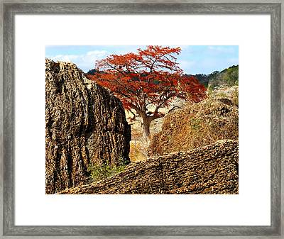 Framed Print featuring the photograph Framed Colors by David  Norman