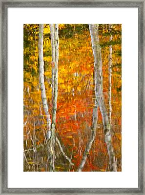 Framed Fire Birches And Foliage Reflection Framed Print