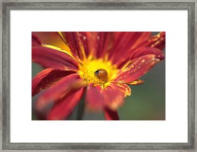 Framed In Beauty Framed Print