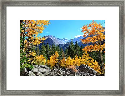 Framed In Gold Framed Print