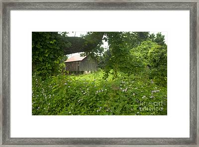 Framed In Green Framed Print by Paul W Faust -  Impressions of Light