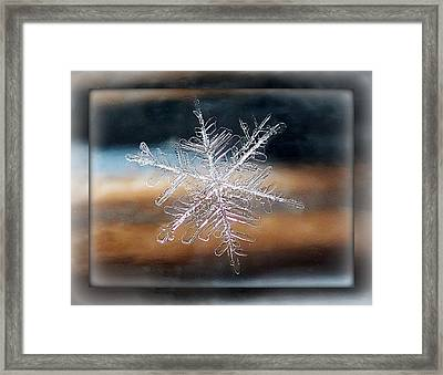Framed Snowflake Framed Print by Lorella  Schoales
