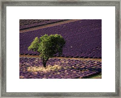 France, Drome, Provence-alpes-cote Framed Print by David Barnes
