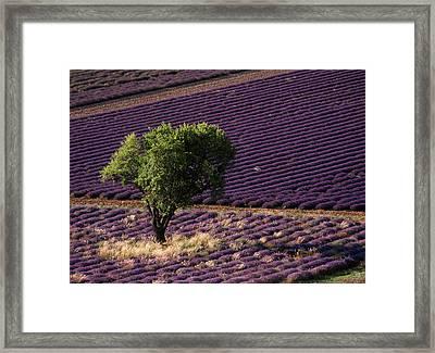 France, Drome, Provence-alpes-cote Framed Print by David Barnes