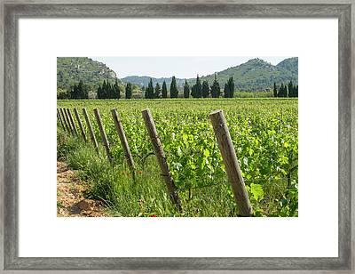 France, Luberon, Provence, Vineyards Framed Print
