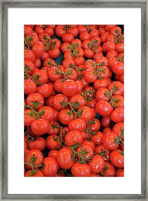 France, Paris Tomatos, Thursday Market Framed Print