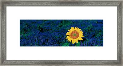 France, Provence, Suze-la-rouse Framed Print by Panoramic Images