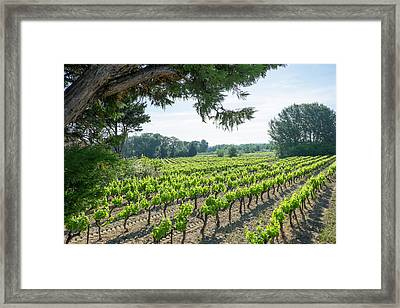 France, St Remy, Countryside Vineyards Framed Print by Emily Wilson