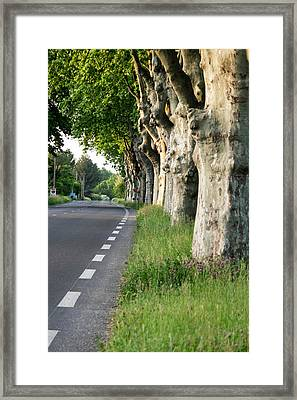 France, St Remy, Rural Road Framed Print by Emily Wilson