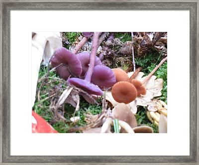 France Wild Mushrooms Framed Print by Dawn E Davis