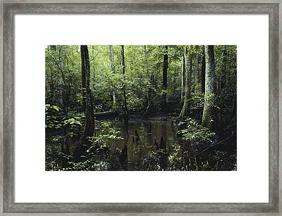Francis Beidler Forest Framed Print by Larry Cameron
