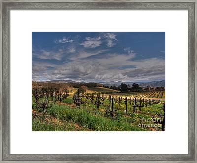 Francis Ford Coppola Winery Framed Print by Jacklyn Duryea Fraizer
