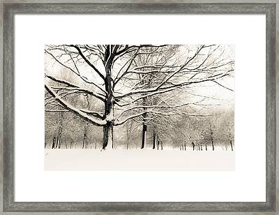 Francis Park In Snow Framed Print